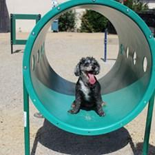 Dog Park at Listing #135811