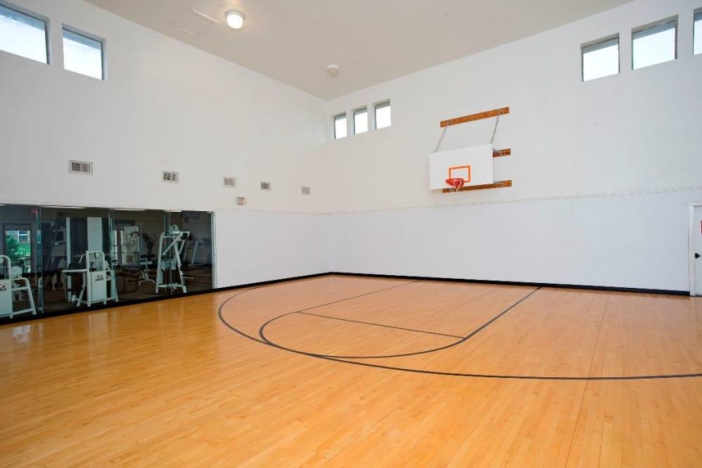 Basketball at Listing #137762