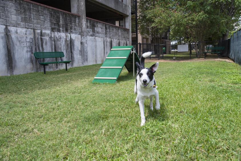 Dog Park at Listing #141360