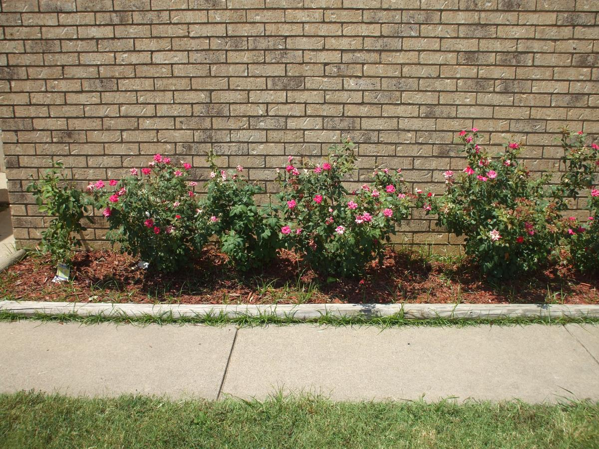 Landscaping at Listing #136515