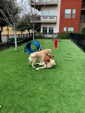 Dog Park at Listing #149168