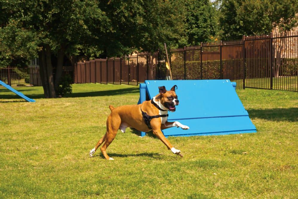 Dog Park at Listing #144684