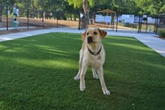 Dog Park at Listing #303270
