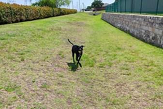Dog Park at Listing #137918
