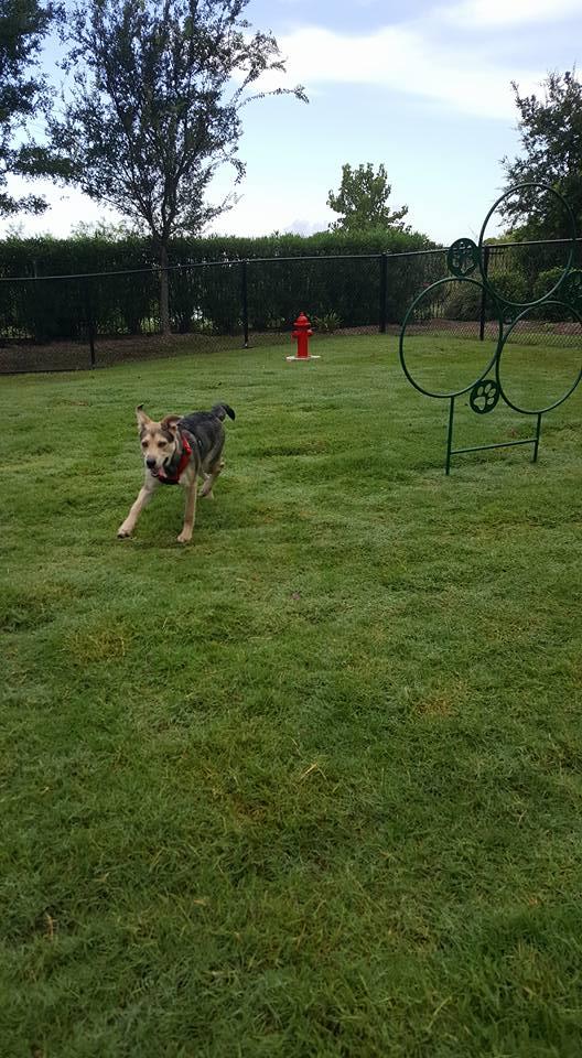 Dog Park at Listing #152219