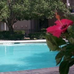 Pool at Listing #139935