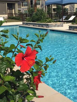 Pool at Listing #260503