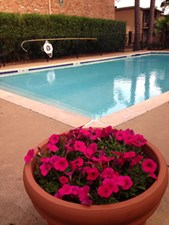 Pool at Listing #140001